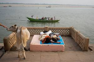 A cow and some people lying down